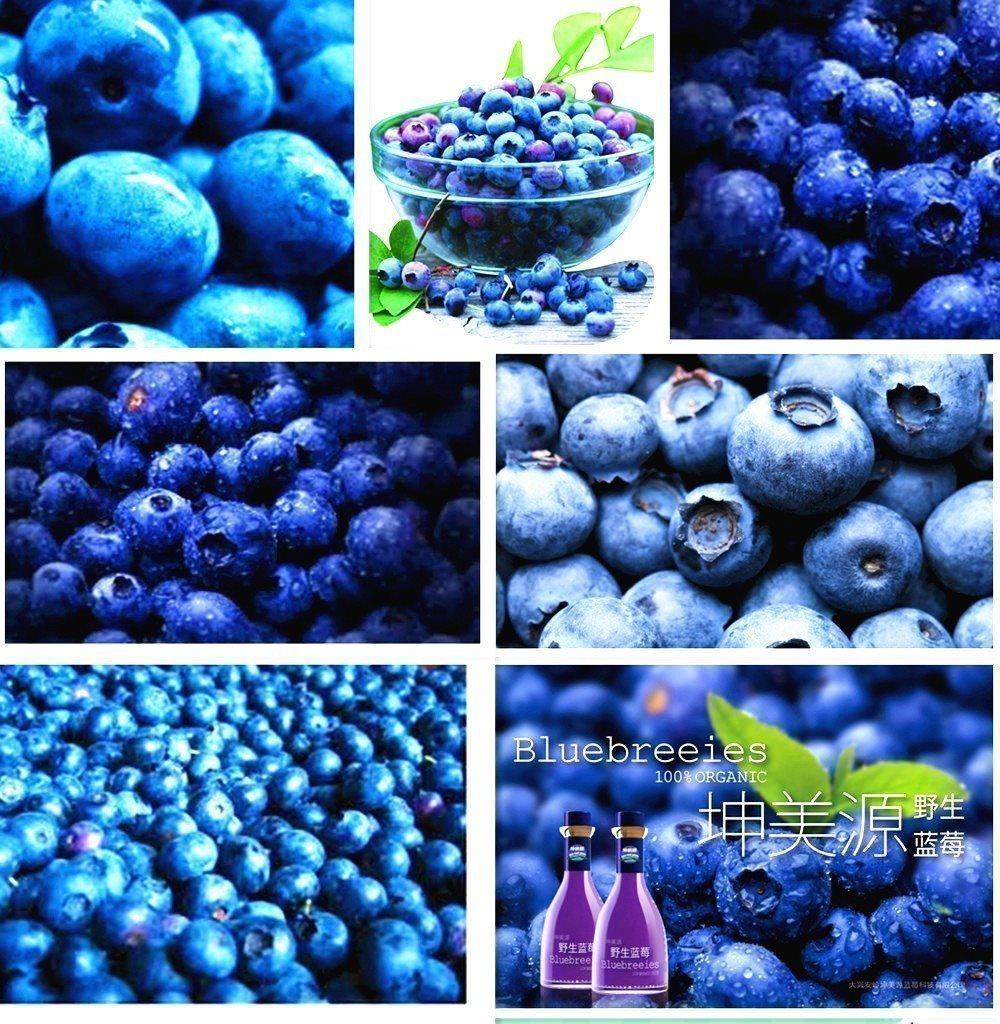 köpa amerikanska blåbär