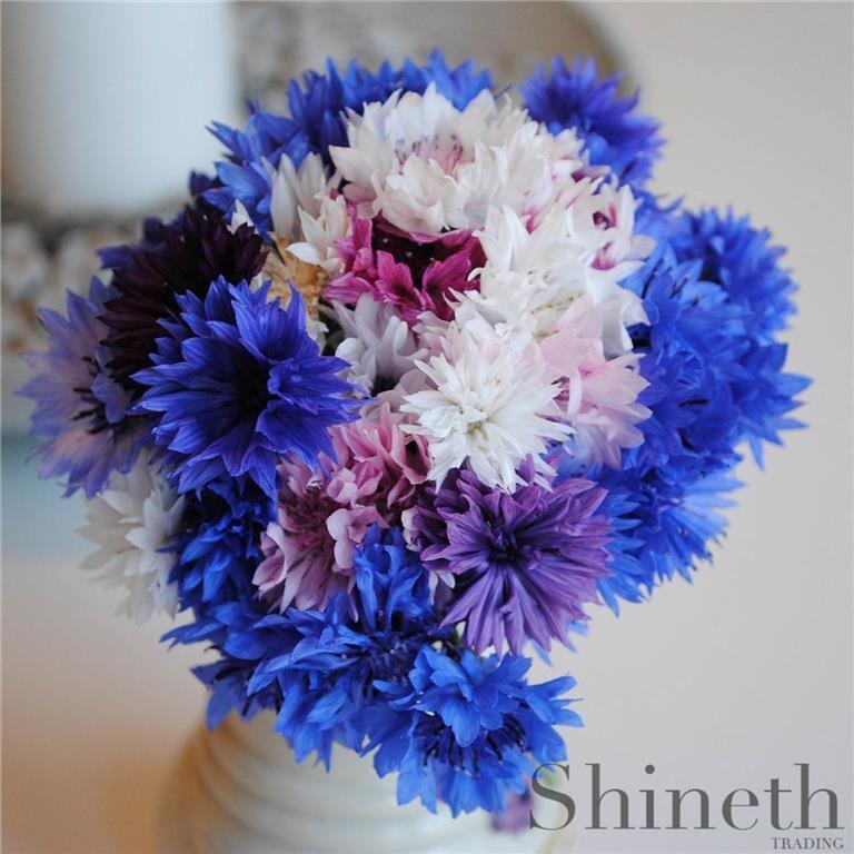 500 st frön/förp. Blåklint Blåklint Blåklint - tio olika sorter (Färgmix) f5e2ac