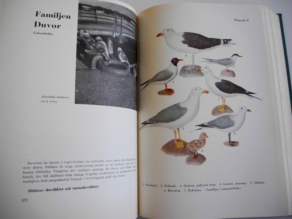 FÅGELBOKEN Sveriges fåglar fåglar fåglar i ord och bild Hjalmar Rendahl 1957 05be3e