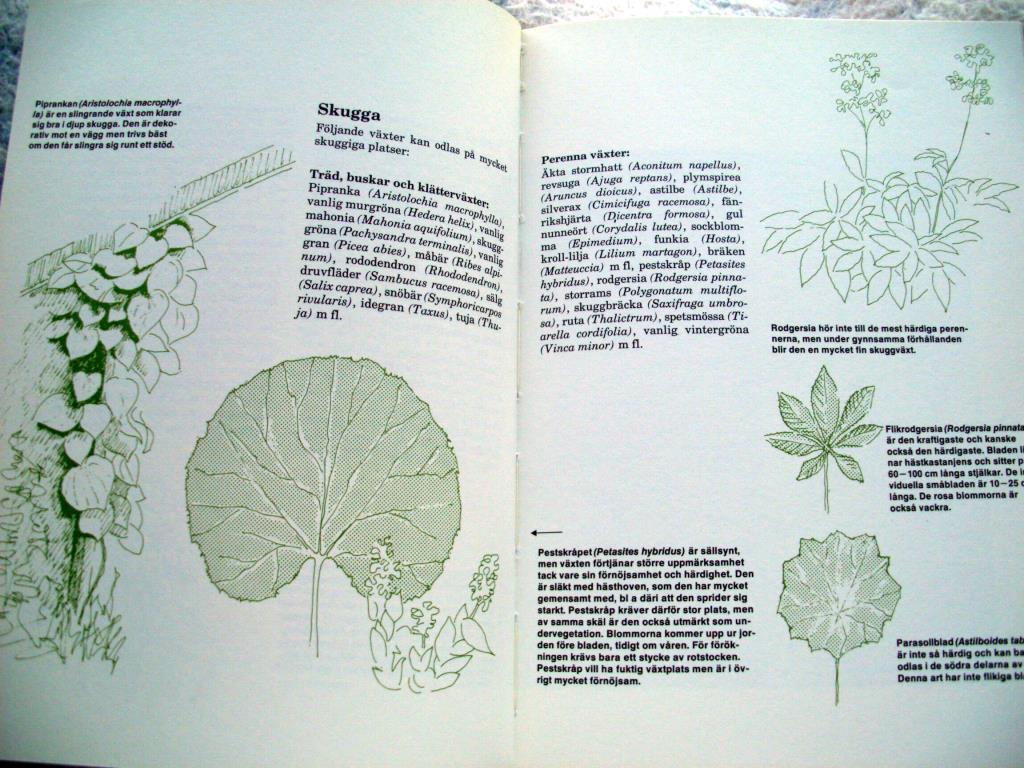 Idéer för trädgården : kaarina aas [planera din trädgård] på ...