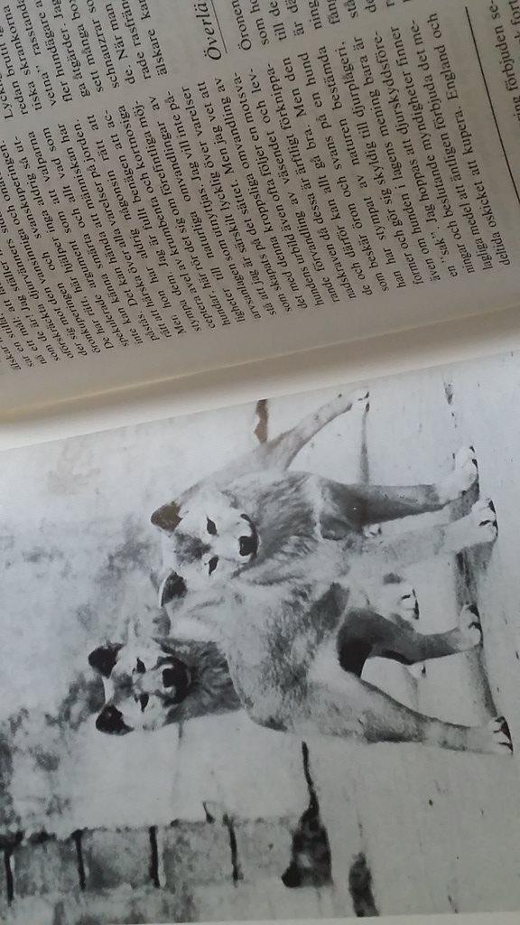 bok Hund Sådan Sådan Sådan är din hund c13192