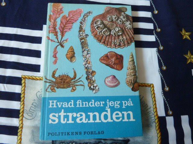 hvad finder jeg på stranden bogen