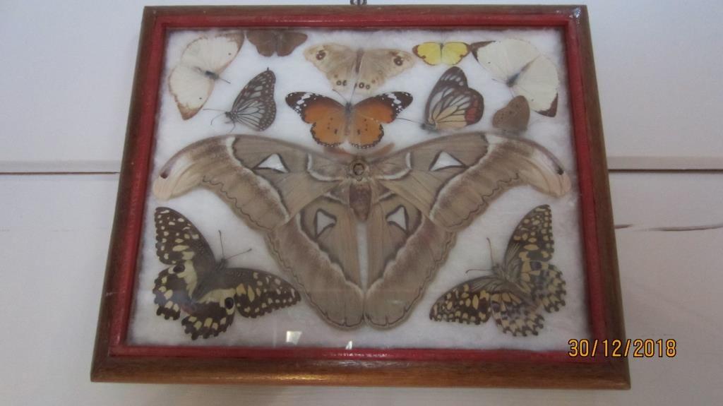 tavla med fjärilar