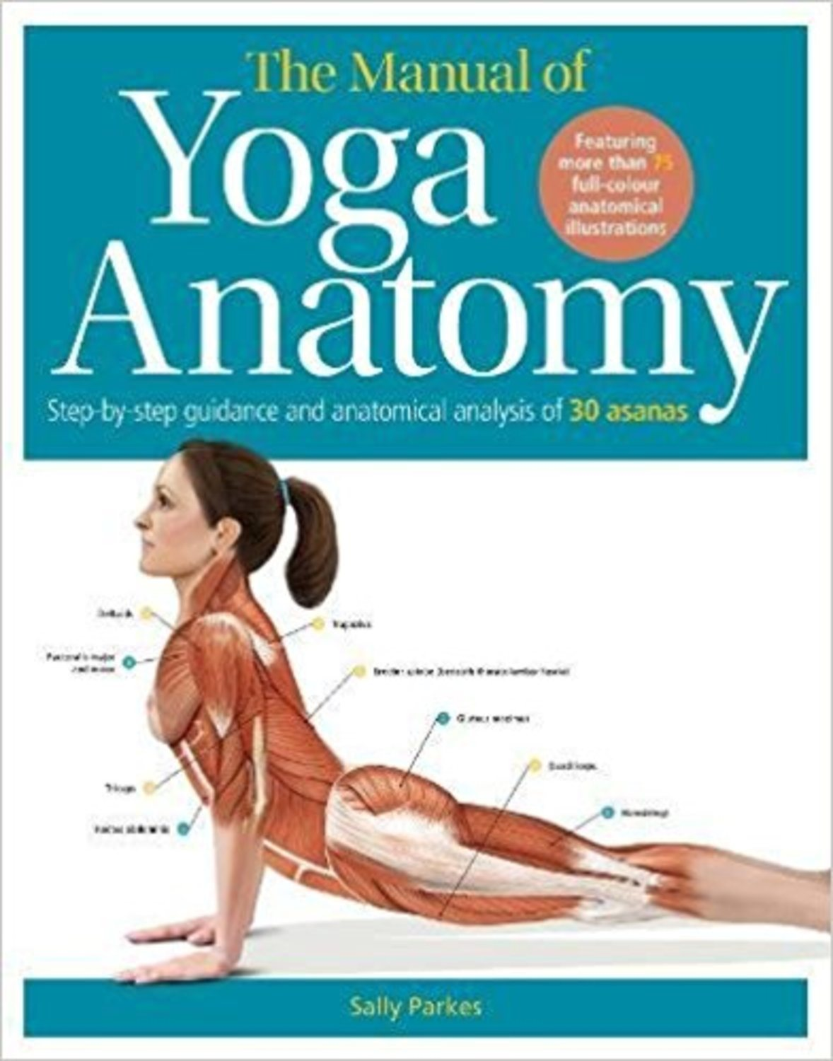Manual of yoga anatomy 9780857625182