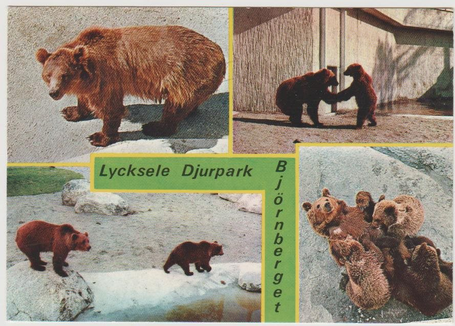 Lycksele Lycksele Djurpark Björnberget Fl 294241940 ᐈ Köp