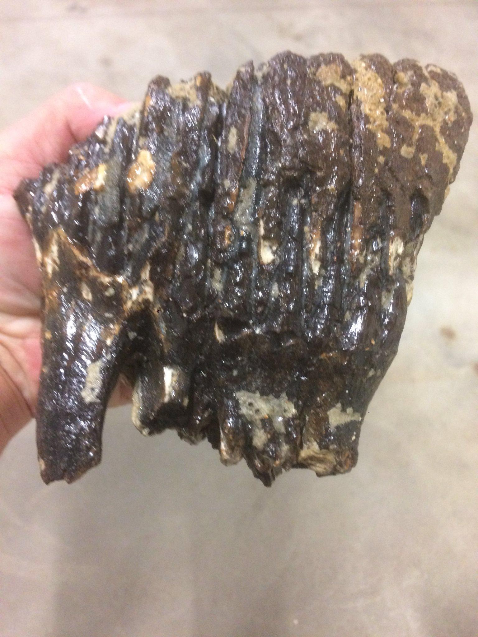 köpa fossil i sverige