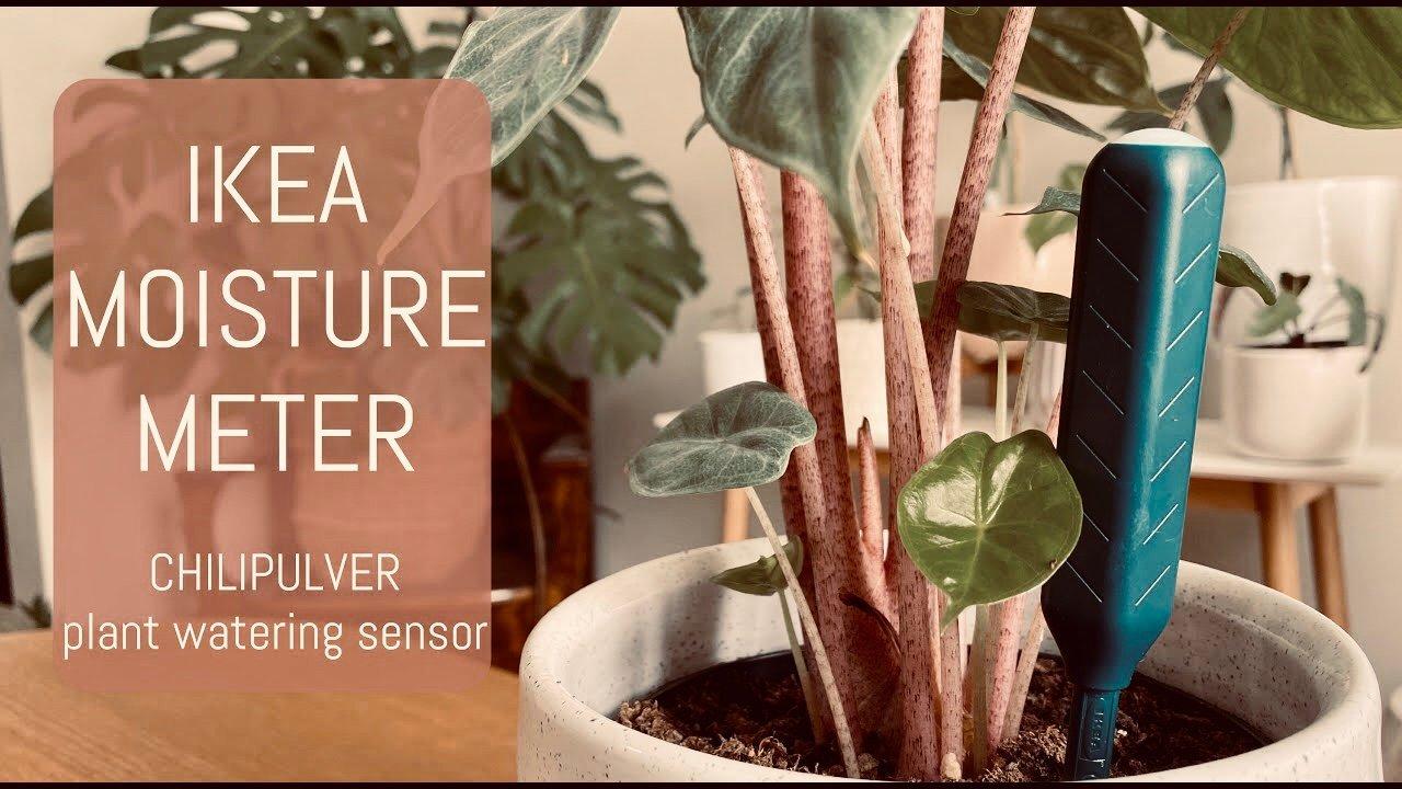 Ikea Chilipulver Fuktsensor för växter blommor Växt blomma Trädgård Garden