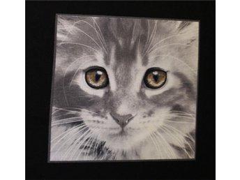 Tyg: katter till lapptäcke kudde.. - Hässelby - Tyg: katter till lapptäcke kudde.. - Hässelby