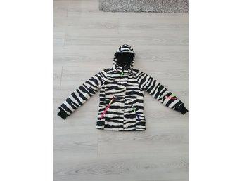 molo zebra jacka