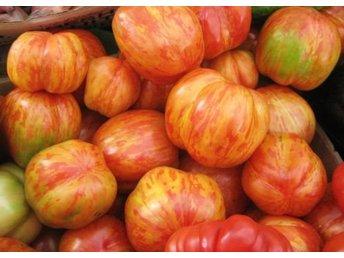 Javascript är inaktiverat. - Lidingö - Tigerella är en tomatsort som ger en pålitlig skörd av normalstora tomater i rött och gult.Så på våren, groning tar 6-14 dagar. Temperaturen bör ligga på 18-23 grader.Plantera om plantan till större kruka när den är stor nog att fly - Lidingö