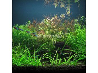 1000x Bulk Aquarium Oxygen Mixed Plant Grasfrön Aquatic Fish Tank Decor Ny c