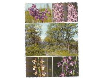 Gotland -Blomstervärld, pressbyrån FT 24155 - Segeltorp - Gotland -Blomstervärld, pressbyrån FT 24155 - Segeltorp