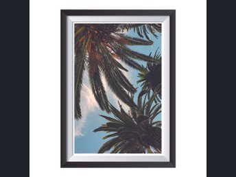 Affisch/Poster Foto Palmer/Palm trees 33x48cm