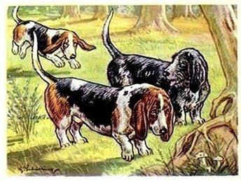 Samlarbild - Basset Hound - Kamerad Hund 1952 - Stenungsund - Samlarbild - Basset Hound - Kamerad Hund 1952 - Stenungsund