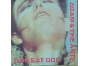 """Adam & The Ants - Dog Eat Dog* UK 7"""" - Hägersten - Adam & The Ants - Dog Eat Dog* UK 7"""" - Hägersten"""