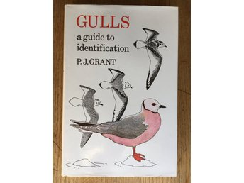 GULLS - a guide to identification