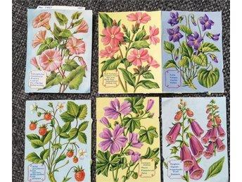 32 st äldre bokmärken blommor träd växter frukt, bl a MPL 1261,1279,1457,1458 - Mölndal - 32 st äldre bokmärken blommor träd växter frukt, bl a MPL 1261,1279,1457,1458 - Mölndal