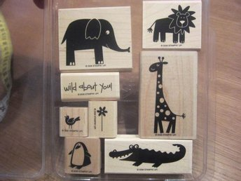 Stämpelset från Stampin Up  - Wild about you