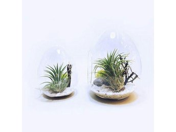 DIY item - make your own mini garden