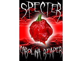 Carolina Reaper Frön Från Sverige! - Huddinge - Carolina Reaper Frön Från Sverige! - Huddinge
