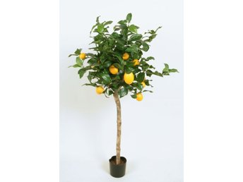 Lemon Tree (Citron Träd) - 110cm