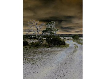 Photo from Gotland 'Trees by the road' - Liepaja - Photo from Gotland 'Trees by the road' - Liepaja