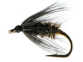 Black - Peacock Spider - # 10 - Umeå - Black - Peacock Spider - # 10 - Umeå