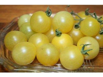 Javascript är inaktiverat. - Lidingö - White Cherry är en ovanlig och vacker tomatsort som ger rikligt med ljusa söta körsbärstomater. Så på våren, 1 frö per kruka. Gror efter 6-14 dagar, groningstemperatur 18-23 grader. Omskola plantan till större kruka när den är stor n - Lidingö