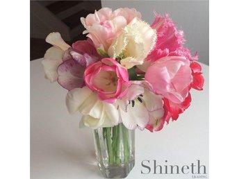 9 st. lök/förp.Shineths eleganta tulpanmix-tulpanlökar (mix) - Hisings Kärra - 9 st. lök/förp.Shineths eleganta tulpanmix-tulpanlökar (mix) - Hisings Kärra