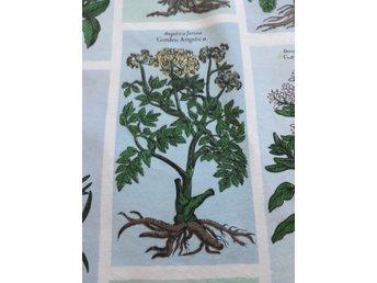latinska namn på växter