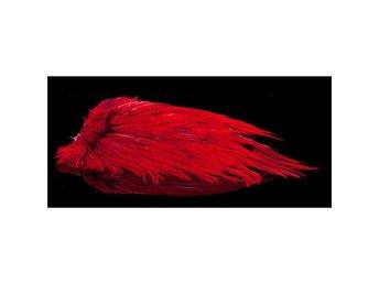Cock Saddle Red - Sölvesborg - Cock Saddle Red - Sölvesborg