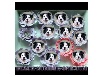 Border collie tårtoblater - Cupcake toppers