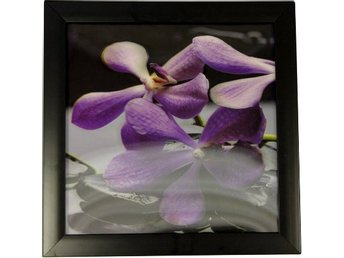 Spa Orchid. Black Framed High Definition 3D Ikonisk Utskrift. 30cm x 30cm.