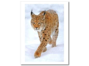 "NYTT! Poster/Konsttryck ""Beautiful Lynx in Winter"" 23 x 30 cm"