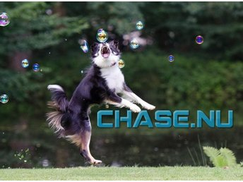 Chase.nu