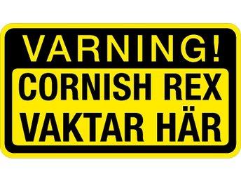 cornish rex vaktar här - klistermärke varning - älvkarleby - cornish rex vaktar här - klistermärke varning - älvkarleby