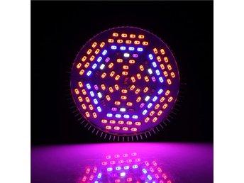 Växtlampa Växtbelysning Fullspektrum lampa E27 LED 30W - Hong Kong - Växtlampa Växtbelysning Fullspektrum lampa E27 LED 30W - Hong Kong