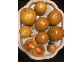 Javascript är inaktiverat. - Fjärås - Ponderosa är en långlagringstomat. De blir gula på utsidan och lite orange på insidan Dessa mycket hållbara tomatsorter kan man spara så att man har tillgång till färska tomater även under de mörka månaderna. Det är väl ingen gorme - Fjärås