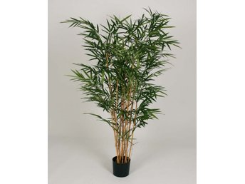 Royal Bamboo Tree - 140cm