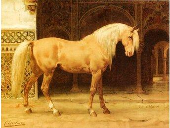 ANDALUSIER HÄST PURA RAZA ESPANOLA av Eerelman Hästar OLJETRYCK A2 - Helsingborg - ANDALUSIER HÄST PURA RAZA ESPANOLA av Eerelman Hästar OLJETRYCK A2 - Helsingborg