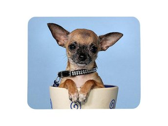 Hund Chihuahua musmatta, present till Chihuahua älskare - Karlskrona - Hund Chihuahua musmatta, present till Chihuahua älskare - Karlskrona
