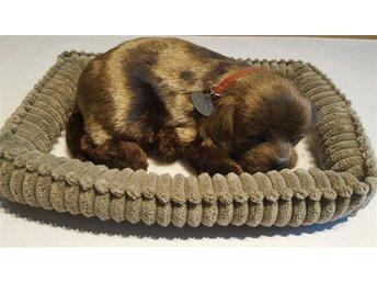 Verklighetstrogen gosedjur, sovande hund som andas - brun labrador - Steninge - Verklighetstrogen gosedjur, sovande hund som andas - brun labrador - Steninge
