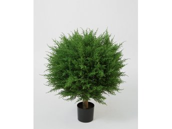 Cupressus Ball Tree (Cypress) - 73cm