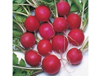 Javascript är inaktiverat. - Mörarp - Delikat vår- och sommargrönsak. Sorten ger helt runda helt röda rädisor, som kan stå länge utan att bli träiga. Trivs bäst i lucker fuktighetshållande jord.Odlingsinstruktioner medföljer!Köp tre fröpåsar så skickar jag med en påse - Mörarp