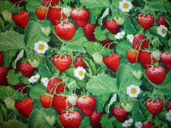 Tyg: jordgubbar till, grytlapp, lapptäcke kudde.. - Hässelby - Tyg: jordgubbar till, grytlapp, lapptäcke kudde.. - Hässelby