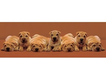 Keith Kimberlin - Sharpei Pups