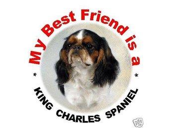 Bil dekal King Charles Spaniel huvud - Vellinge - Bil dekal King Charles Spaniel huvud - Vellinge