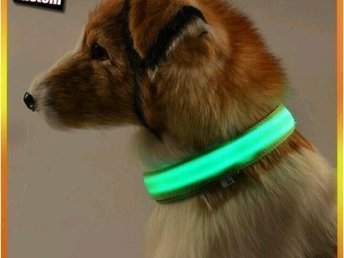 Hund led light halsband koppling L - Jordbro - Hund led light halsband koppling L - Jordbro