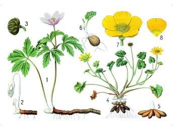 Skolplansch blomstermotiv, 70x50 cm - Onsala - Skolplansch blomstermotiv, 70x50 cm - Onsala
